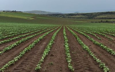 HIGHLY PRODUCTIVE CROP FARMS FOR SALE UGIE / MACLEAR AREA