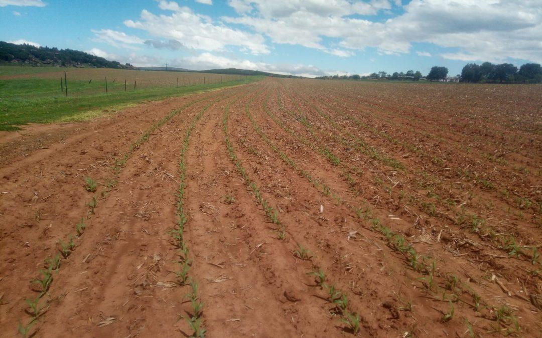 MACLEAR ARABLE LAND FARM FOR SALE