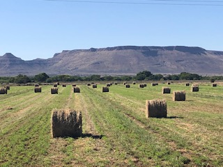 FISH RIVER IRRIGATION FARM (80ha water rights) TEEBUS STEYNSBURG, EASTERN CAPE