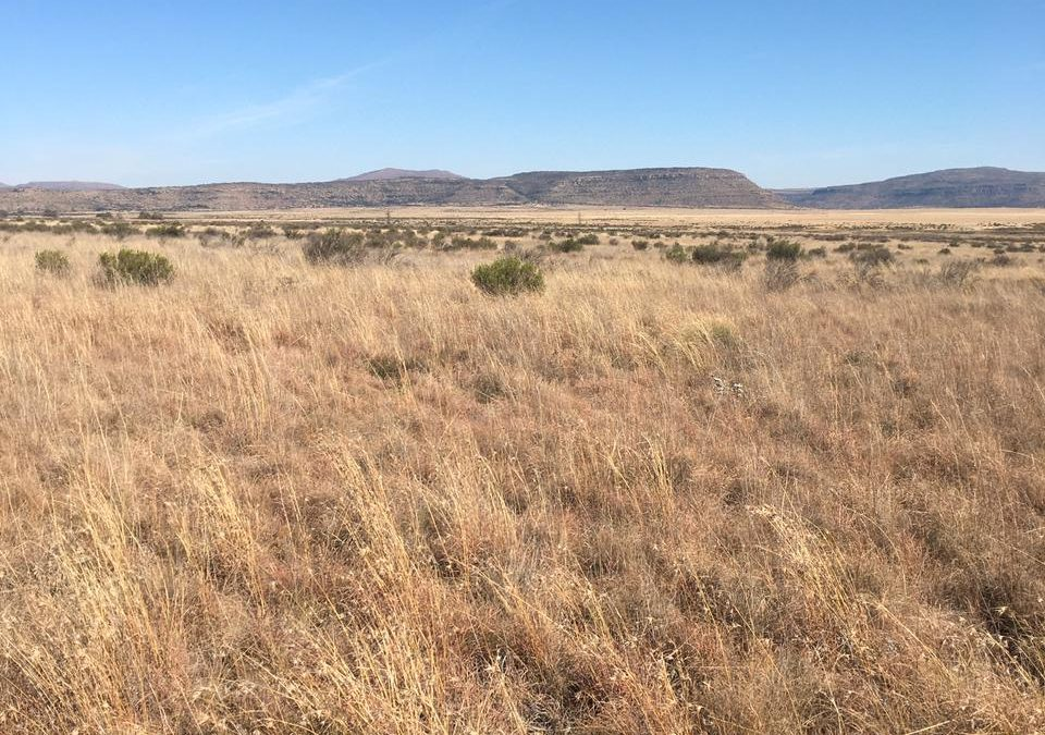 HOFMEYER / MOLTENO 2 EXCELLENT FARMS TO LEASE